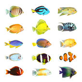 热带鱼. — 图库照片