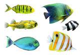 Tropical fish. — Stock Photo
