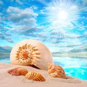 A conch shell on an tropical beach. — Stock Photo