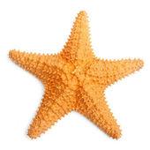 La estrella de mar caribe. — Foto de Stock