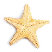 The caribbean starfish. — Stock Photo