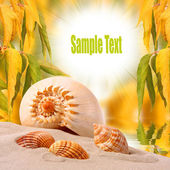 A conch shell on an tropical beach with easy removable text. — Stock Photo