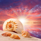 Sea shells on the beach and beautiful sunset over a tropical sea. — Stock Photo