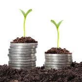 Para büyüme. — Stok fotoğraf