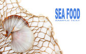 Fishing net with shell and easy removable text. — Stock Photo