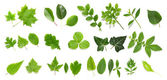 Green leaf collection on white background — Stock Photo