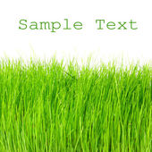 Fresh spring grass with easy removable text. — Stock Photo