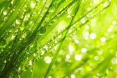 Fresh morning dew. — Stock Photo