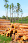 Timber harvesting in Bohemian forest - Czech Republic - Europe — Stock Photo
