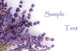 Bunch of a French lavender. Great for greeting-card. — Stock Photo