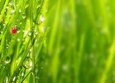 The Ladybug. — Stock Photo