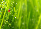 The Ladybug. — Stock Photo
