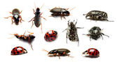 Beetle collection on white background — Stock Photo