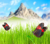 Mountain meadow with two butterfly. — Stock Photo