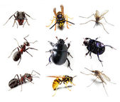 Insect collection on white background — Stock Photo