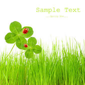 Clover quarterfoils with ladybugs over a fresh spring gras and easy removable text. — Stock Photo