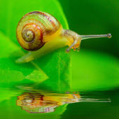 Funny picture of a speedy snail on a dewy grass. — Stock Photo