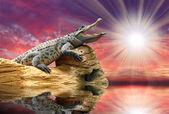 The Crocodile against sunset sky over a tropical sea. — Stock Photo