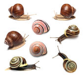 Snails collection on white background — Stock Photo