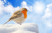 Birdie (European Robin - Erithacus rubecula) on a snowy roof. Winter sunny day concept. — Stock Photo