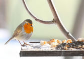 The European Robin (Erithacus rubecula) on a full bird table. — Stock Photo