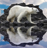 Polar bear on the cliff — Stock Photo