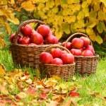 Fresh ripe apples in the basket — Stock Photo