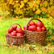Stock Photo: Fresh ripe apples in basket