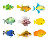 Collection of a tropical fish — Stock Photo