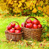 Fresh ripe apples in the basket — Stock Photo