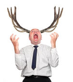 Funny picture of an stupid manager (husband) with great antlers — Stock Photo