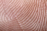 Fingerprint - extremely close up micro-photography — Stock Photo