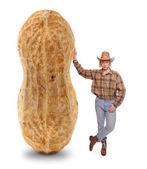 Farmer with peanut — Stock Photo