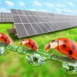 Solar energy panels in rural landscape. Environmental protection concept. — Stock Photo