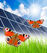 Solar energy panels and butterflies — Stock Photo