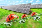 Solar energy panels against sunny sky and ladybugs — Stok fotoğraf