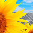 Solar energy panels on a sunflower field — 图库照片