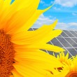 Solar energy panels on a sunflower field — Stock Photo