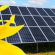 Solar energy panels on a sunflower field — ストック写真