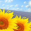 Solar energy panels on sunflower field — Stock Photo #33450587