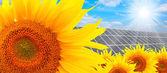 Solar energy panels on a sunflower field — Stock Photo
