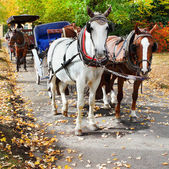 The carriage horses in the park — Stock Photo