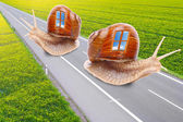 Funny picture of a snails with mobile home on the road. Easy travel metaphor. — Stock Photo