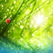 Ladybug running on dewy grass. — Stok Fotoğraf #33577565
