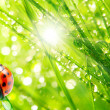 Ladybug drinking fresh morning dew. — Stock Photo