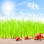 Ladybugs family on The Road — Stock Photo #33579821