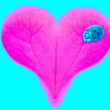 Pink heart with ladybug — Stock Photo