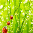 Ladybugs family — Stockfoto #33579895