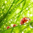 Stock Photo: Ladybugs family