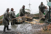 Unidentified fishermen enjoy harvest of pond Blatna — Stock Photo